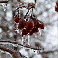 ледяной дождь. :: Береславская Елена