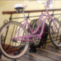 Розовый прикол :: galina bronnikova