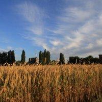 Так ростёт хлеб :: Cain Amberskii