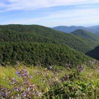 В горах Геленджика :: оксана косатенко