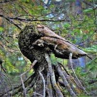 Лесной страж :: Сергей Чиняев