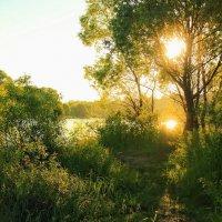 А утро обещает знойный день... :: Лесо-Вед (Баранов)