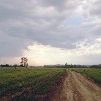 Перед грозой :: Сергей Белявцев
