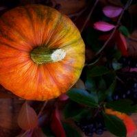 Тыква на фиолетовых листьях. :: Белла Витторф