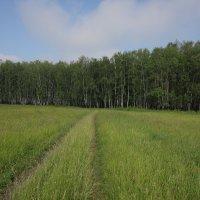 Дорога в лес :: Николай Холопов