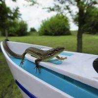 reptiles   :: Svetlana Baglai