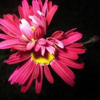 Цветочная любовь в ночи. :: Valentina