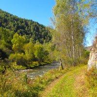 Тропинка у реки. :: Валерий Медведев