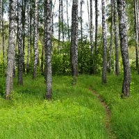 В грибом лесу :: Милешкин Владимир Алексеевич