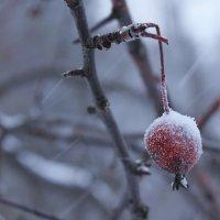 Райское яблоко в снегопад :: Avada Kedavra!