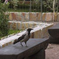 Птица на прогулке :: Aнна Зарубина