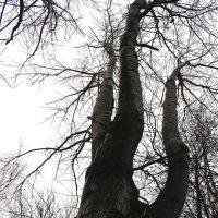 Такое дерево................ :: Валерия  Полещикова