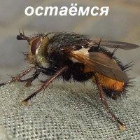 зимовать :: Владимир Порфирьевич