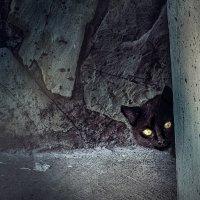 Чёрный кот :: Olga Zhukova