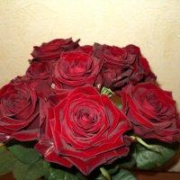 розы :: Светлана Егорова