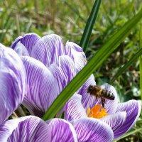 Весна :: Светлана Щербакова