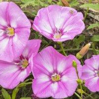Полевые цветы :: юрий Амосов