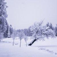 Зима в Дворцовом парке :: Татьяна Бронзова