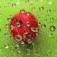 Сколько яблок? :: Наталья Казанцева
