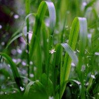 Зелёное царство :: Ирина Сивовол