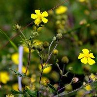 Есть особая прелесть в цветах полевых ... :: Валентина ツ ღ✿ღ