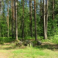 В июньском лесу. :: Валентина Жукова