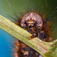 Портрет бабочкиной бабушки :: Владимир Шамота