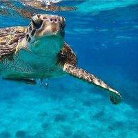 Симиланская черепаха :: Marina Kondakovochka