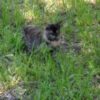 Кошка Монка и тополиный пух :: Ирина Диденко