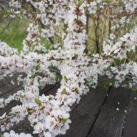 Весна! :: Наталья Тимофеева