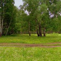 Дорога через березняк. :: Мила Бовкун