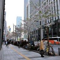 Токио :: Swetlana V