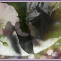 ..и о цветочках. :: Ирина Сивовол