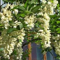 Запахи весны :: Лидия (naum.lidiya)