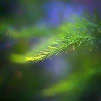 asparagus :: Zinovi Seniak