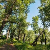 Дорога вдоль берега реки Демы :: Сергей Тагиров