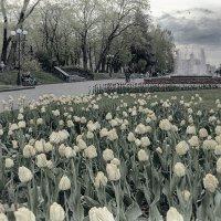 Тюльпаны и фонтаны. :: Андрий Майковский