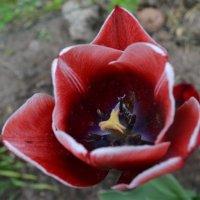Аленький цветочек. :: zoja