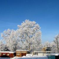 Зима :: Светлана Сметанина