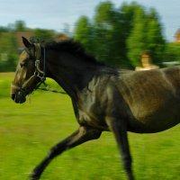 лошадь :: andrew585 585