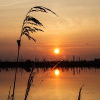 Комариное лето. :: Поток