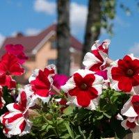 Утопает июнь в цветах :: Андрей Заломленков
