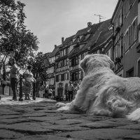 как видят собаки... :: Георгий Вапштейн