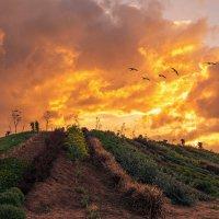 Огненный восход :: Arkady Berg