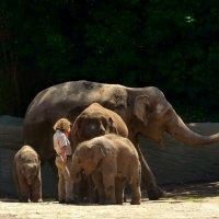 Слоны :: Nina Yudicheva