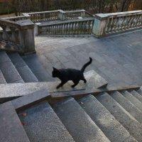 Кот учённый .. ( с Рублёвки ;-) :: Alexey YakovLev