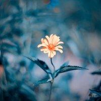 цветочек :: Владимир Князев