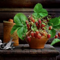 Витамины на ветке :: ида Слизких