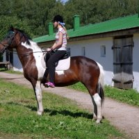 Яснополянский красавец-конь. :: Alex 711402
