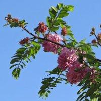 Повторное цветение :: Татьяна Смоляниченко